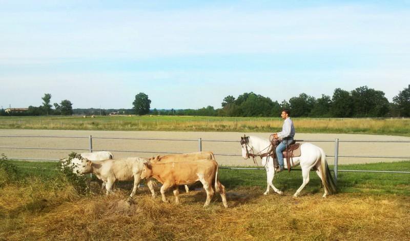 IMG_7895_Lavoro col Bestiame